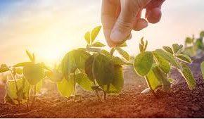 çevresel sürdürebilirlik